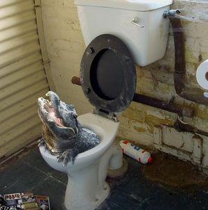 Crocodile-in-the-sewer-urban-legends-231554_487_491